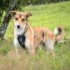 Kotia etsivä koira: DANA (ent. Aki) (Suomessa)