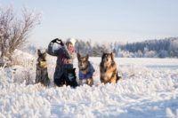 Kuvassa Kulkurien toiminnanjohtajata Salla Honkapää istuu lumessa kolmen koiransa kanssa.