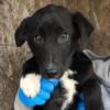Kotia etsivä koira: CORYLUS (Garden-pennut)