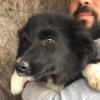 Kotia etsivä koira: ACHILLEA (Garden-pennut)