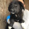 Kotia etsivä koira: ARUNCUS (Garden-pennut)