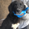 Kotia etsivä koira: GERANIUM (Garden-pennut)