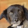 Kotia etsivä koira: POOKIE