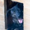 Kotia etsivä koira: HÄSÄÄ