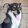Kotia etsivä koira: EDITH (Runotytöt)
