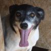Kotia etsivä koira: ADIS, ERITYISADOPTIO