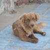 Kotia etsivä koira: MISTY KNIGHT, ERITYISADOPTIO