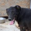Kotia etsivä koira: ORKO