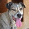 Kotia etsivä koira: PÄRLA