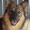 Kotia etsivä koira: ROMINA RUSH