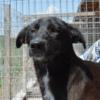 Kotia etsivä koira: KAIUS (The Black Family)